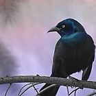 Halloween Common Grackle by KatMagic Photography