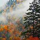 AUTUMN MIST,NEWFOUND GAP by Chuck Wickham