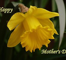 """Honour of Mothers""  One Single Narcissus Daffodil by Anita  Fletcher"