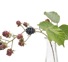 Blackberry Fruits by Ann Garrett