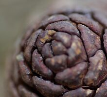 Pine Cone Close Ups by Wealie