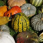 Pumpkin patch 2 by purplefoxphoto