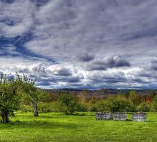 Apple Picking by Monica M. Scanlan