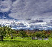 Apple Picking by Monica M. Scanlan