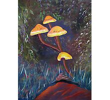 Hiding among the toadstools Photographic Print