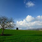 Green field by maumar70