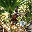 Dark Red Tail Flies Out of the Palm by DARRIN ALDRIDGE