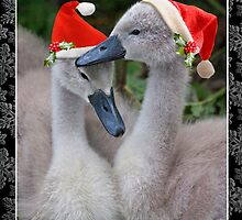 Cygnet Christmas by Krys Bailey
