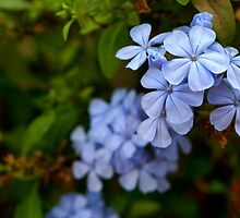 Blossom in the blue by Prasad