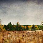 Skookumchuck Wilderness by Lynnette Peizer