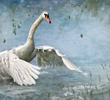 Riverdance by Lyn Evans