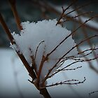 Snow Cone by Mike  MacNeil