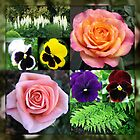 Roses and Pansies Collage by kathrynsgallery