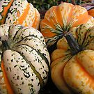 Patterned Squashes by epgaskell