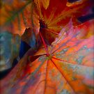 150 # # # # # I do Love You !!!  autumn leaves !!! Tribute to Frank Sinatra - Autumn Leaves .   by Brown Sugar . Favorites: 4 Views: 150 thank you ! by AndGoszcz