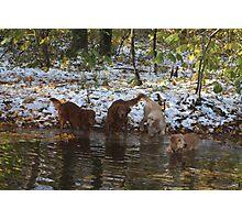 Surprise SnowStorm Golden Retriever Joy Photographic Print