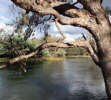 Murray River Albury-Wodonga VIC by OzNatureshots