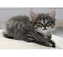 Cute Kitten Photographic Print
