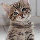 Please. Please. Tell me I'm cute. by Paul Murray