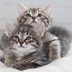 Two Kitten by Paul Murray