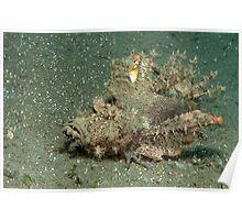 Inimicus didactylus Devil Scorpion, North Sulawesi, Indonesia Poster