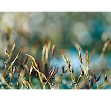 Abstract from Nature Photographic Print
