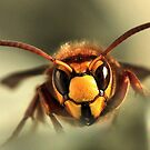 HORNET by Russell Couch