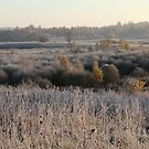 First frost in grassland by Antanas