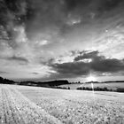 A Delicate Sky Plays with the Evening Harvest Sun BW by Andy F