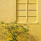 The Yellow Wall by lgraham