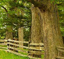 Summer trees............. by Larry Llewellyn
