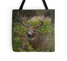 Bullet Buck Takes a Break - White-tailed Deer Tote Bag