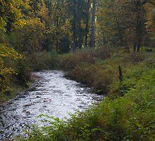 A River Runs Through It by Kay Martin