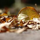 brown leaves on the pathway by tego53