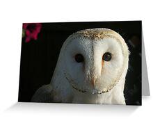 Barn Owl Staring Greeting Card