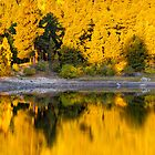 Autumn Golden Hour by John  De Bord Photography