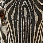 Zebra redux by Mundy Hackett