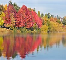 Fall at Green Lake, Seattle, WA by Barb White