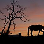 Home on the range. by brilightning
