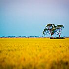 Rural Queensland by Sally Werner
