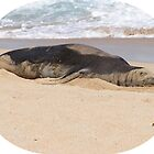 Makana - Hawaiian Monk Seal by Katie Grove-Velasquez