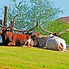 Big Horns by George I. Davidson