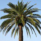 Palm Tree by JDew12345