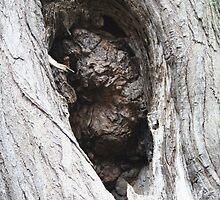 TREE HOLE by Katie Grove-Velasquez