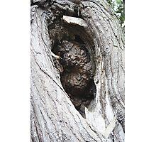 TREE HOLE Photographic Print