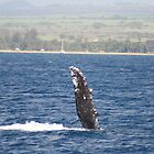 Humpback Whale Pec Fin by Katie Grove-Velasquez