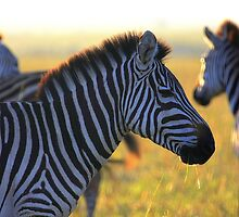 Zebras at Sunrise by Jill Fisher