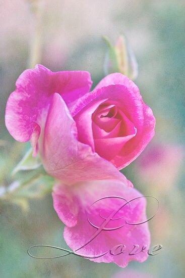 Romantic rose in a mist with love by Celeste Mookherjee