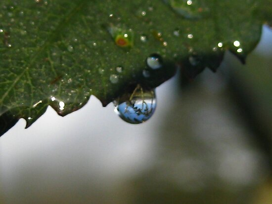 dew reflecting by millymuso