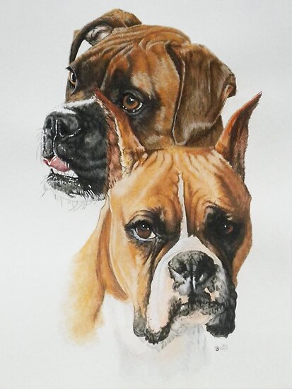Boxers by BarbBarcikKeith